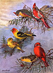 thumbnail of Birds